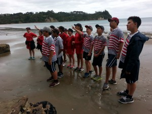 Looking at cliff erosion